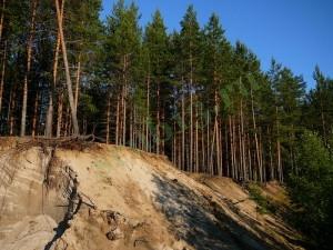 Мордовский лес